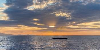 Wale Balene Capo Sant'Andrea Elba